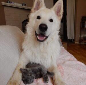 Tÿr de therapiehond